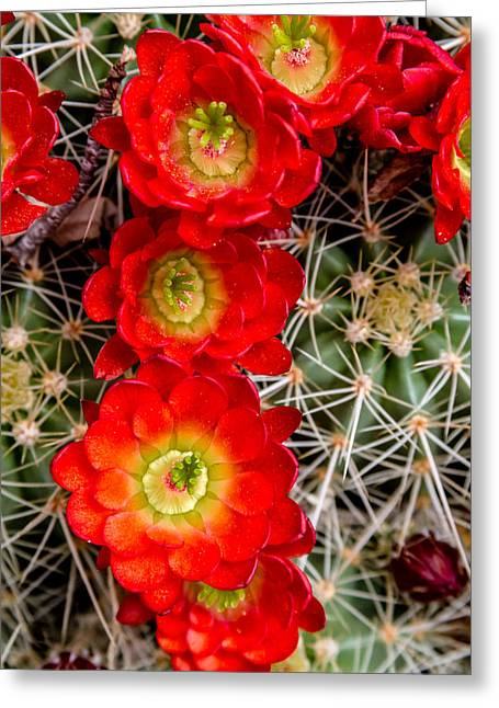Recently Sold -  - Blooms Greeting Cards - Desert Blooms Greeting Card by Teri Virbickis