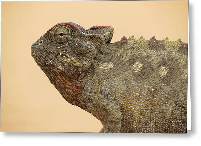 Desert Chameleon Greeting Card by Ramona Johnston