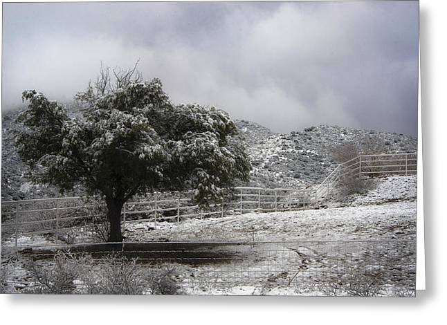 Burr Greeting Cards - Desert Cold Tree Greeting Card by Dave Dilli