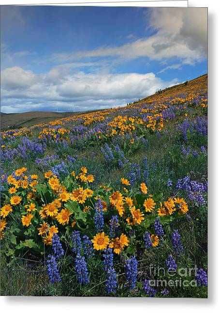 Kittitas Valley Greeting Cards - Desert Color Greeting Card by Mike  Dawson