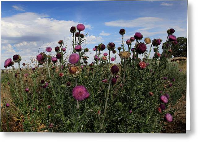 Thorny Greeting Cards - Desert Colors Greeting Card by Joseph G Holland