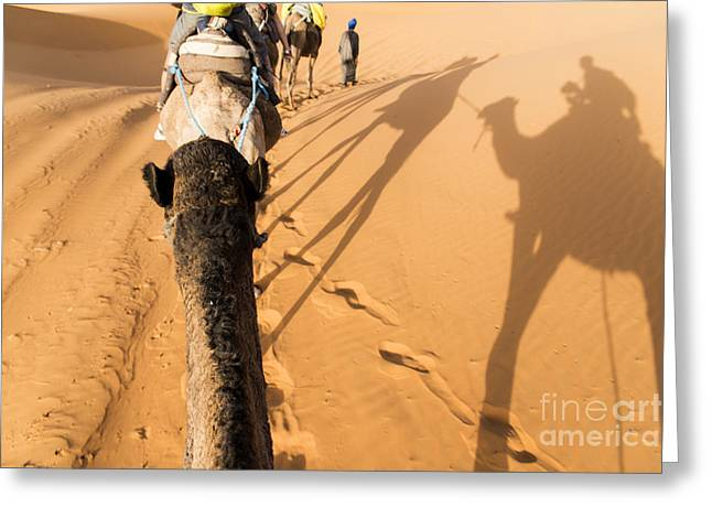 Camels Photographs Greeting Cards - Desert excursion Greeting Card by Yuri Santin