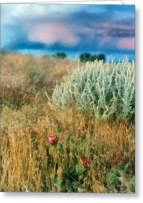 Amazing Sunset Digital Greeting Cards - Desert Flowers Greeting Card by Michelle Calkins