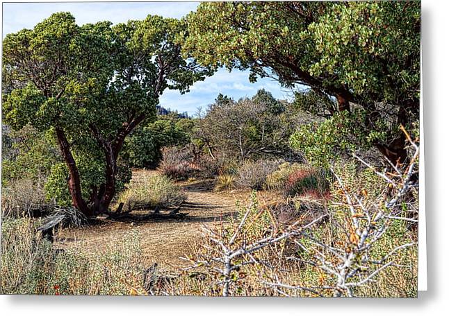 Angeles Forest Greeting Cards - Desert Garden Trail Greeting Card by Glenn McCarthy
