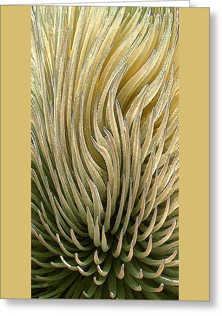 Rosette Greeting Cards - Desert Green Greeting Card by Ben and Raisa Gertsberg