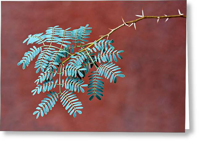 Plantlife Greeting Cards - Desert Jewels #2 Greeting Card by Nikolyn McDonald