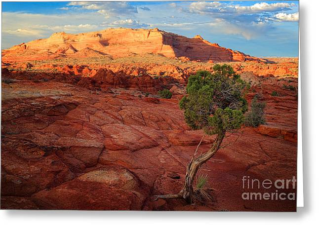 Colorful Cloud Formations Greeting Cards - Desert Juniper Greeting Card by Inge Johnsson