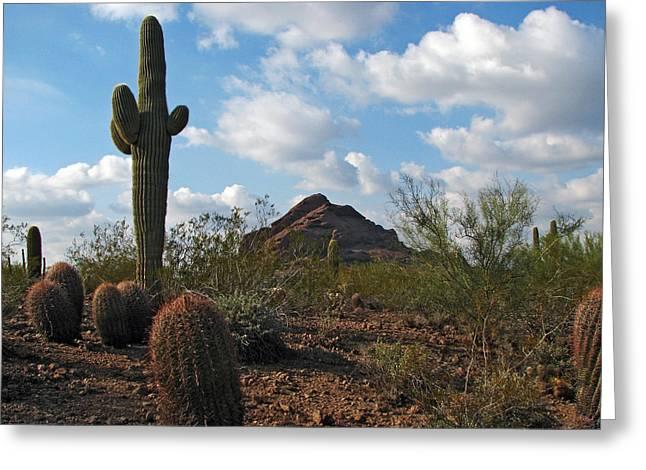 Desert Landscape Greeting Card by John Haldane