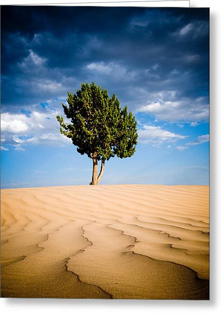 Tony Murray Greeting Cards - Desert Lines Greeting Card by Tony Murray