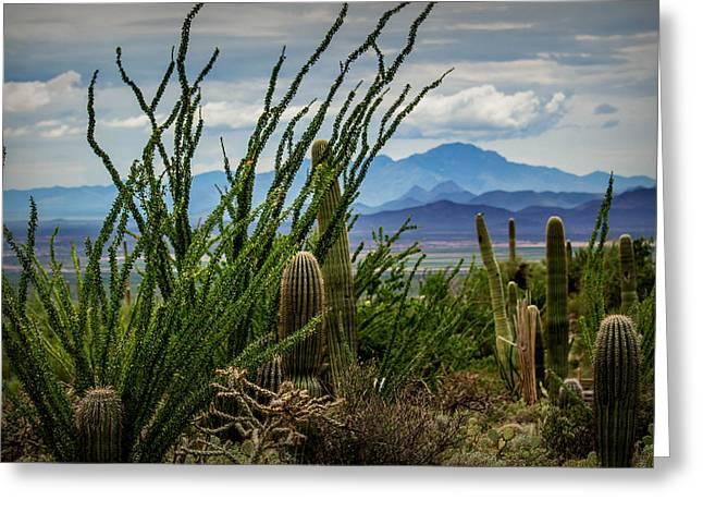 Rain Barrel Greeting Cards - Desert Monsoon Greeting Card by Pete Mecozzi