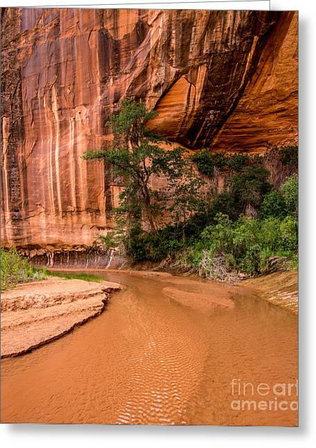 Desert Oasis - Coyote Gulch - Utah Greeting Card by Gary Whitton