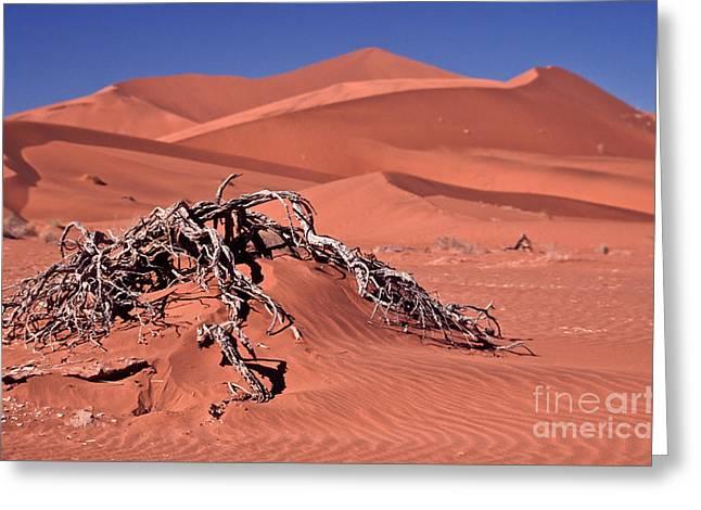 Africa Greeting Cards - Desert Plant Greeting Card by Liz Leyden