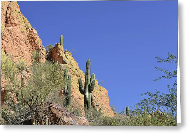 Desert Plants of The Superstitions Greeting Card by Christine Till