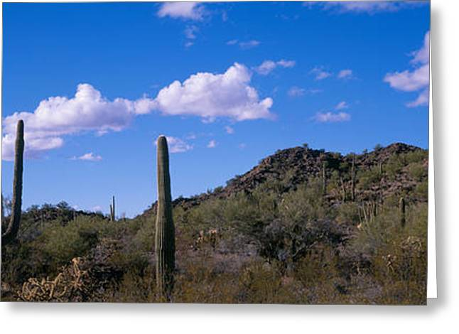 Scenic Drive Greeting Cards - Desert Road Az Greeting Card by Panoramic Images