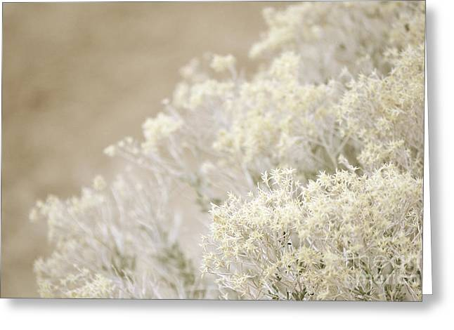 Desert Greeting Cards Greeting Cards - Desert Sage Greeting Card by Andrea Hazel Ihlefeld