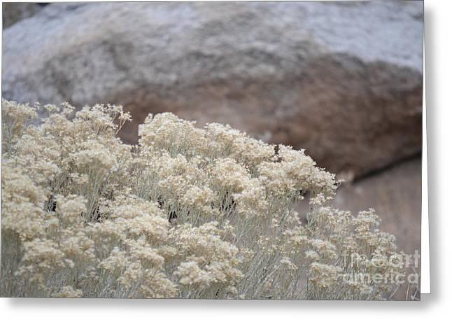 Desert Greeting Cards Greeting Cards - Desert Sage Rock Greeting Card by Andrea Hazel Ihlefeld