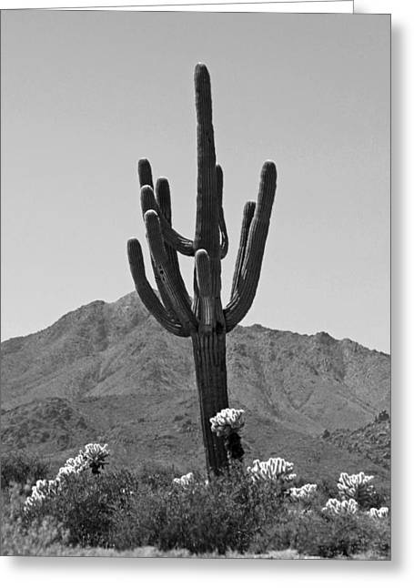 Giclee Cactus Greeting Cards - Desert Scenic - Black and White Greeting Card by Suzanne Gaff