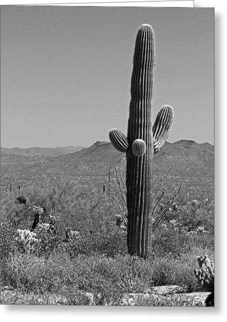 Giclee Cactus Greeting Cards - Desert Scenic III - Black and White Greeting Card by Suzanne Gaff