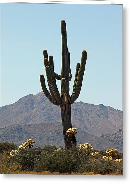 Giclee Cactus Greeting Cards - Desert Scenic  Greeting Card by Suzanne Gaff