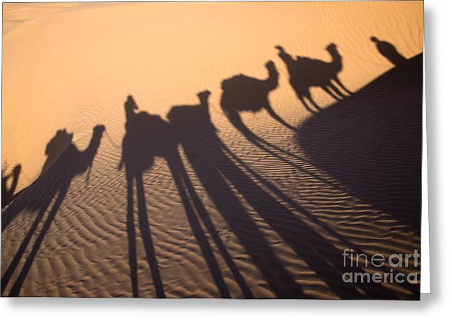 Dromedary Greeting Cards - Desert shadows Greeting Card by Delphimages Photo Creations