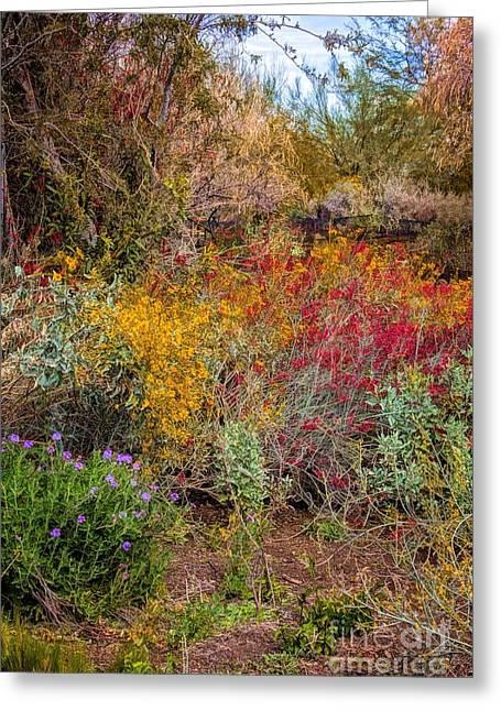 Jon Burch Greeting Cards - Desert Spring Greeting Card by Jon Burch Photography
