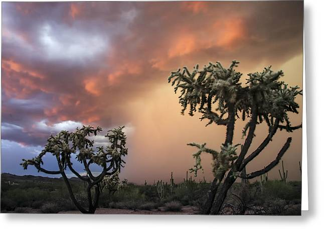 Desert Southwest Greeting Cards - Desert Storms in Central Arizona 2 Greeting Card by Dave Dilli