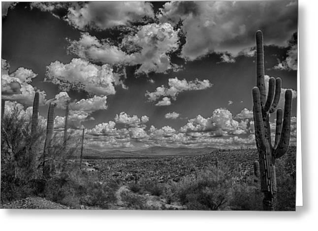 Desert Vista Greeting Card by Judi FitzPatrick