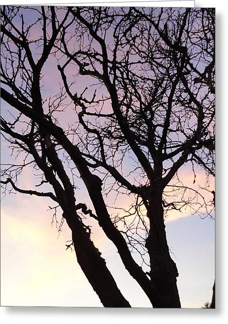 Guy Ricketts Photography Greeting Cards - Deserted Tree Greeting Card by Guy Ricketts
