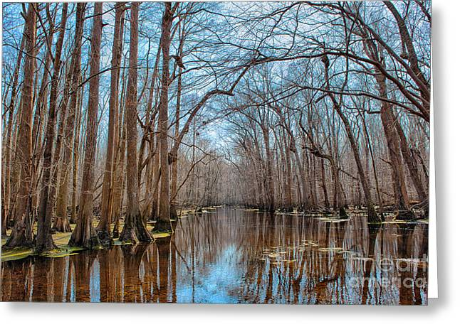 Dismal Greeting Cards - Desolate Paradise - a Swamp in North Carolina Greeting Card by Dan Carmichael