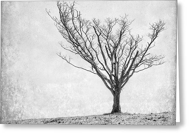 Minimalist Landscape Greeting Cards - Desperate Reach Greeting Card by Scott Norris