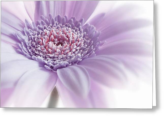 Flower Still Life Prints Greeting Cards - Close Up White Pink Flowers Macro Photography Art Greeting Card by Artecco Fine Art Photography