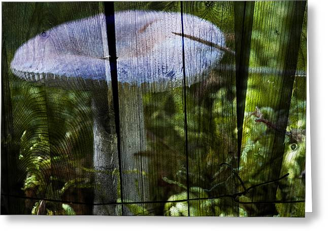 Toadstools Digital Greeting Cards - Destroying angel Greeting Card by Nathan Wright