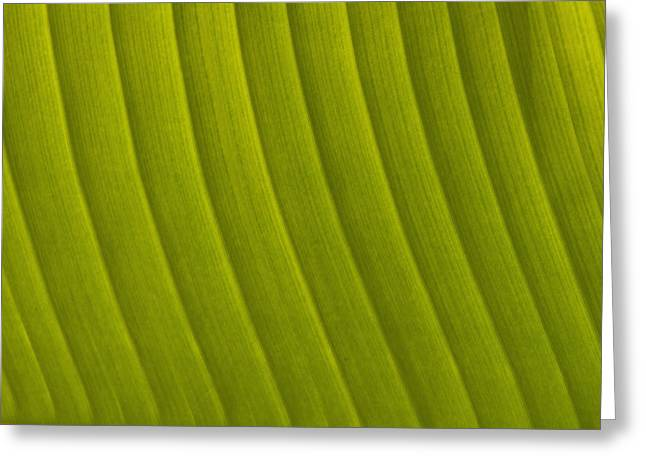 Simple Beauty In Colors Greeting Cards - Detail Of Leaf Marrakech, Morocco Greeting Card by Ian Cumming