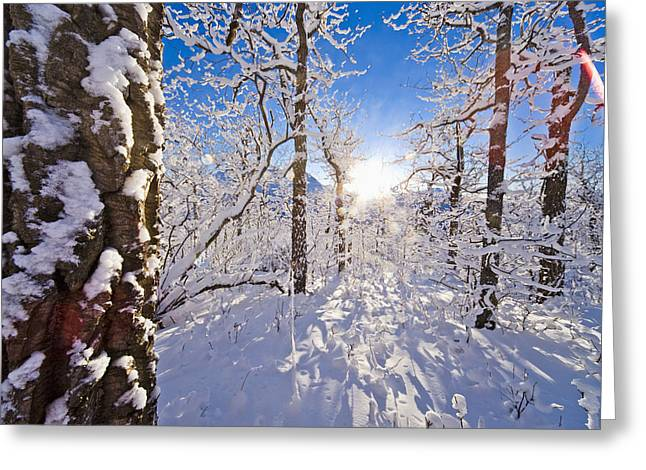 Wintry Greeting Cards - Detail Of Snow Covered Cotttonwoods Greeting Card by Kevin Smith