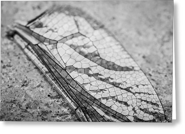 Dragon Fly Photo Greeting Cards - Detailed Dragon Flys Wing Greeting Card by Susan Stone