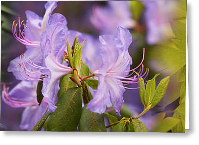 Stamen Greeting Cards - Details Of Bright Colors Flowers Greeting Card by Panoramic Images