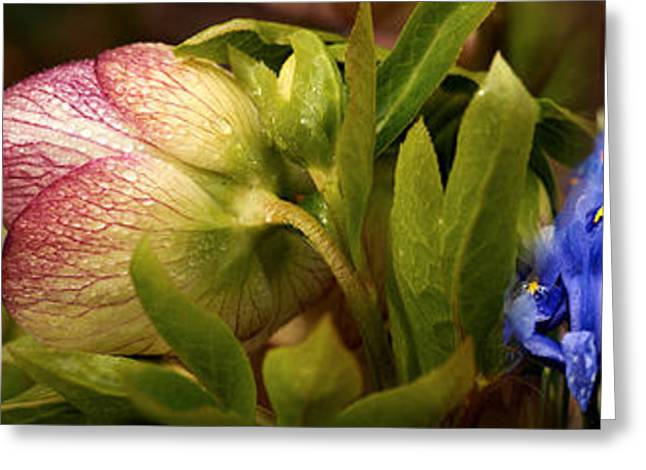 Botany Greeting Cards - Details Of Crocus Flowers Greeting Card by Panoramic Images