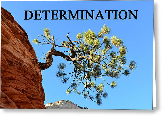 Determination Photographs Greeting Cards - Determination A Greeting Card by David Lee Thompson