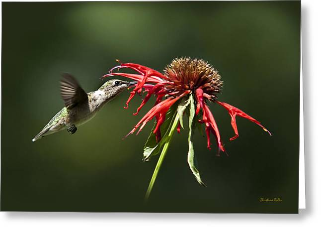Ruby Throated Hummingbird Greeting Cards - Determination Greeting Card by Christina Rollo
