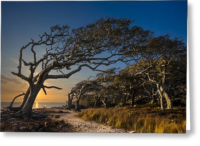 Tree Roots Art Greeting Cards - Determination Greeting Card by Debra and Dave Vanderlaan