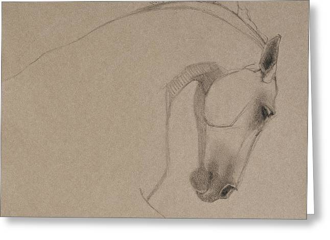 Horse Images Drawings Greeting Cards - Determination - Grey Version Greeting Card by Jani Freimann