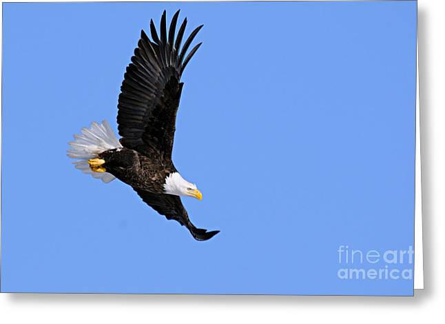 Patriotic Photography Greeting Cards - Determination Greeting Card by Larry Ricker
