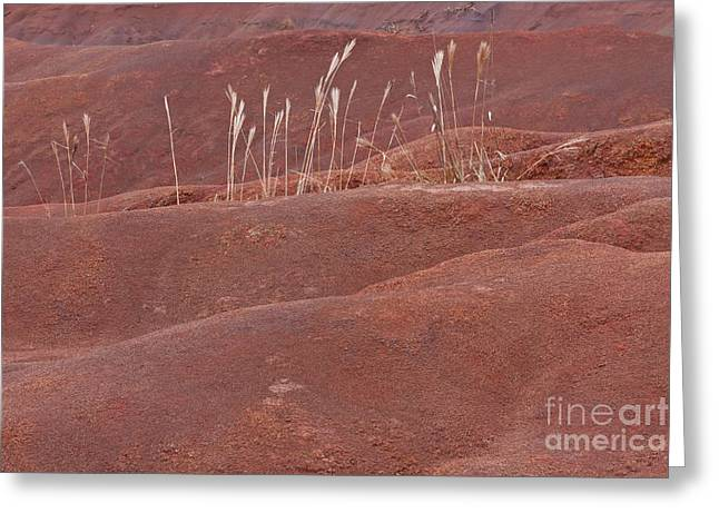 Terra Firma Greeting Cards - Determined Greeting Card by F Innes - Finesse Fine Art