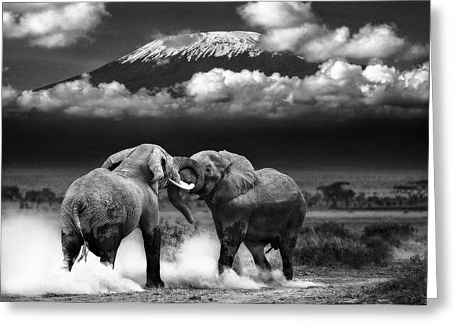 Wild Life Photographs Greeting Cards - Determined To Dominate Greeting Card by Mike Gaudaur