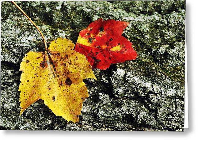 Red Fallen Leave Greeting Cards - Deux Feuilles Greeting Card by JAMART Photography
