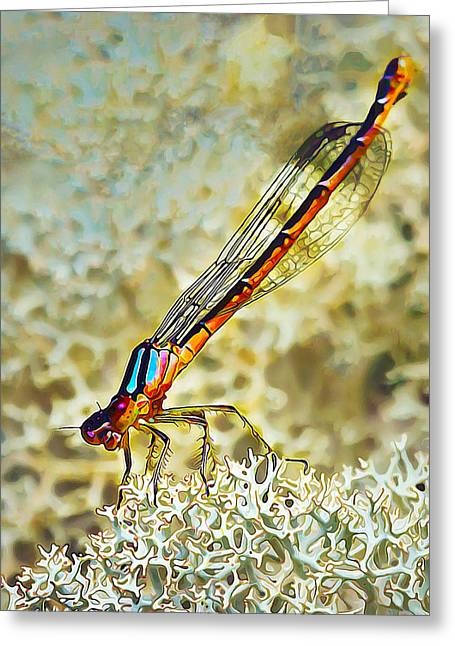 Lichen Photo Greeting Cards - Devilss Head Damselfly Greeting Card by Bill Caldwell -        ABeautifulSky Photography