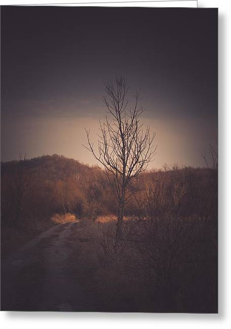 Winter Trees Greeting Cards - Devoration of the Season Greeting Card by Shane Holsclaw