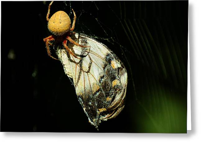 Big Spider Greeting Cards - Devouring Beauty Greeting Card by Rebecca Sherman