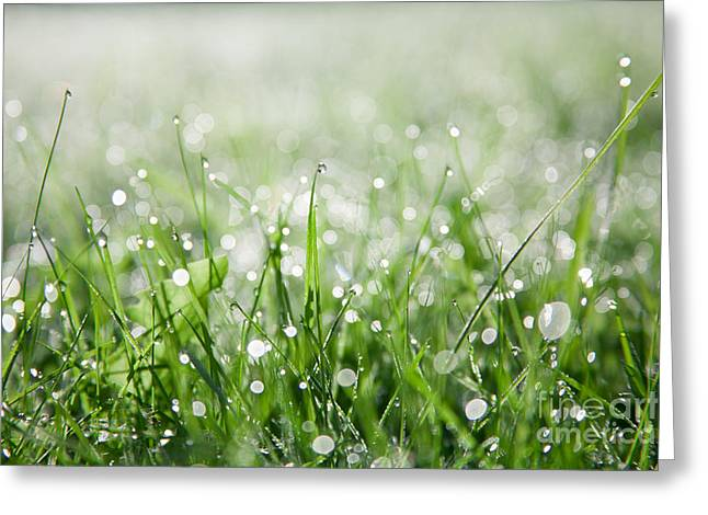 Dew Greeting Cards - Dew Drenched Morning Greeting Card by Jan Bickerton