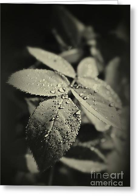 Spotlight Greeting Cards - Dew Drops Greeting Card by Clare Bevan